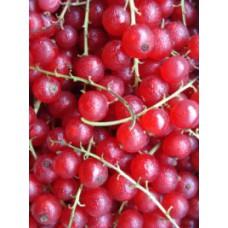 Groseilles rouges (raisinets)  suisses  bac 250g