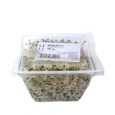 Jeunes pousses alfalfa-rucola, 50g